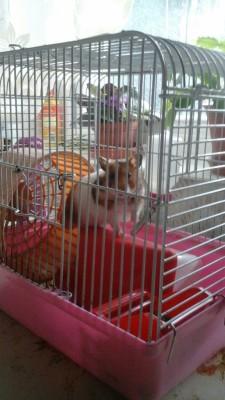 Hamster-Boss owner Emilis