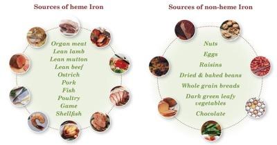 heme-vs-non-heme-iron